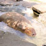 トリアスふれあい動物園に行ってきた。夏も冬も親子で疲れずに楽しめる5つの特徴とコストコ会員だけのお得情報とは。