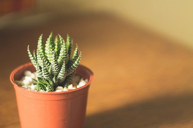cactus-1149784_640