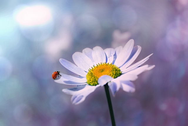 ladybug-1320563_640