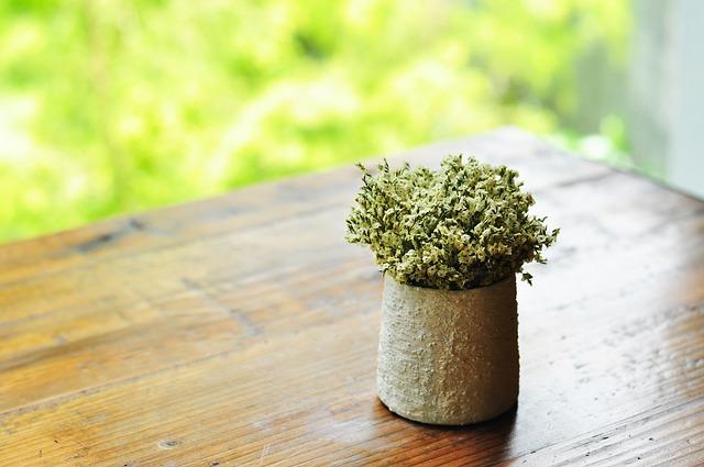 chrysanthemum-833144_640