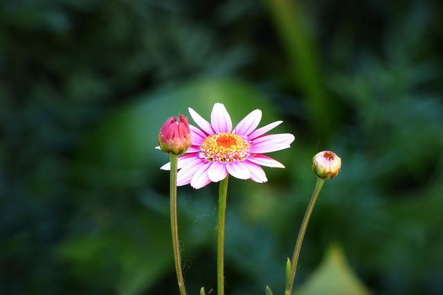 flower-1844337_640