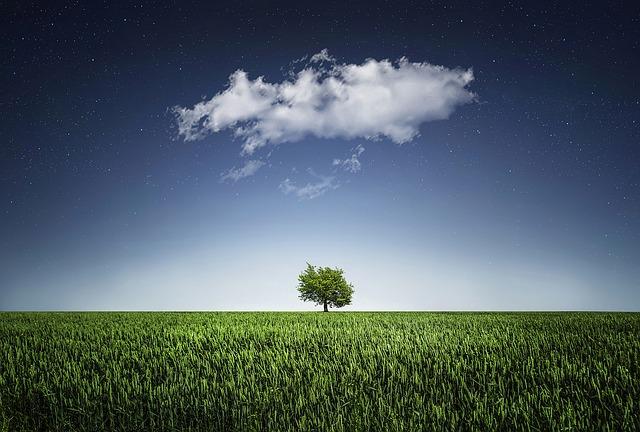 tree-736887_640