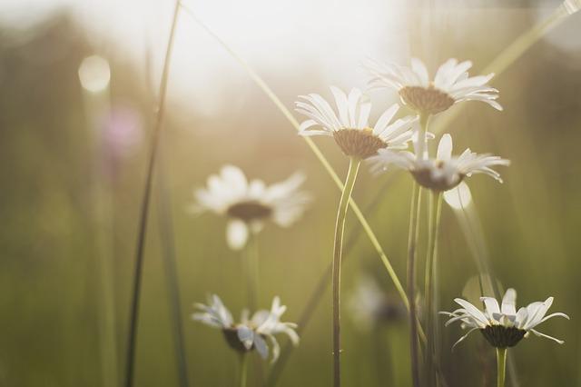 bloom-1838775_640